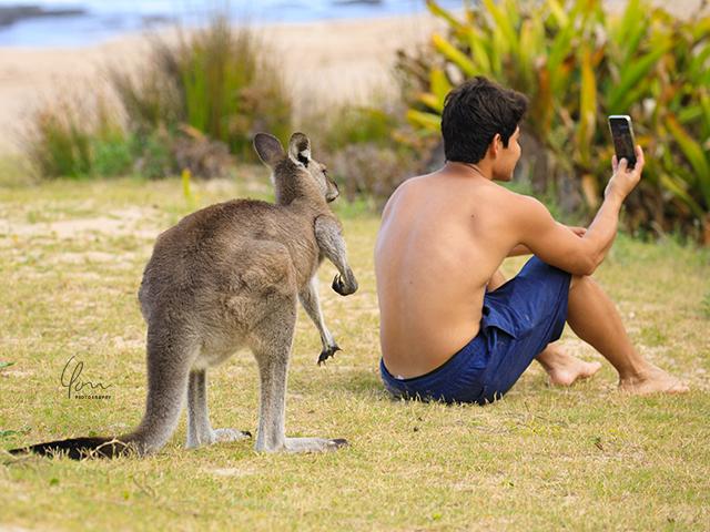 カンガルーとセルフィ Selfie with kangaroo