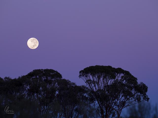 イースター 満月 Easter full moon