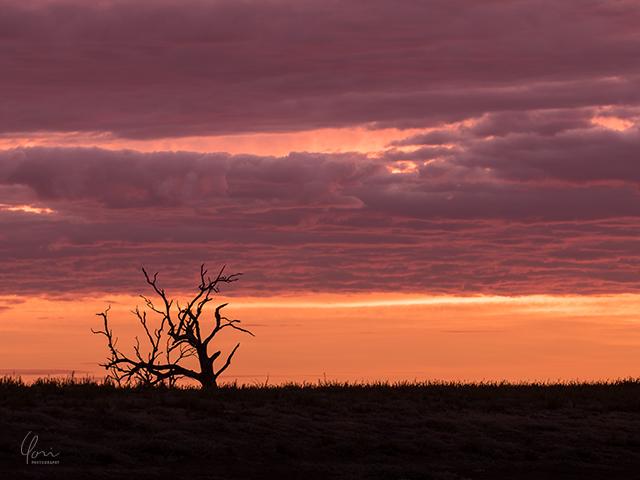 メニンディー 朝焼け シルエットMenindee sunrise silhouette
