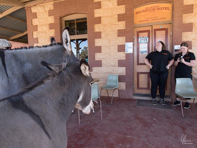 シルバートンホテル ロバ Silverton hotel donkeys