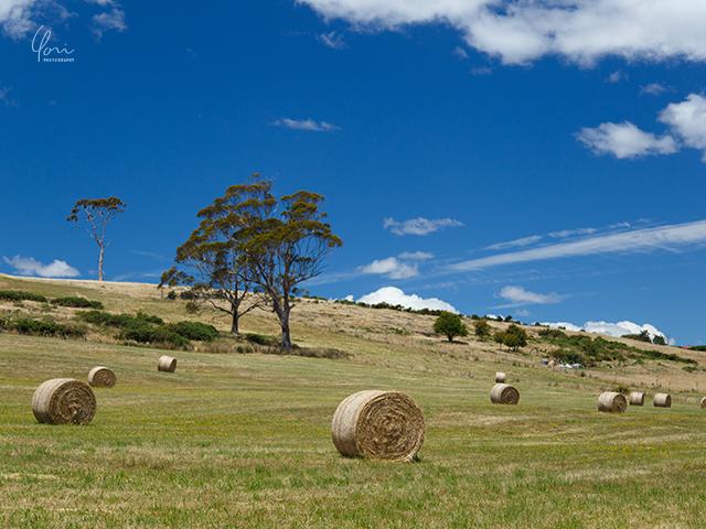 干し草ロール Round hay bale