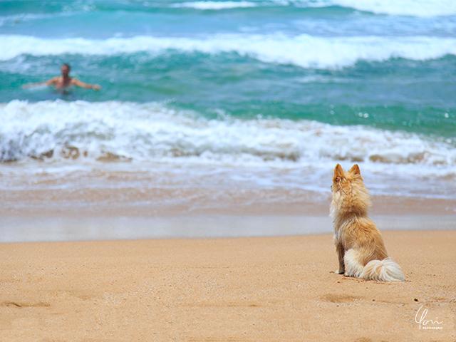ボンボビーチ キアマ近郊 Bombo beach Kiama