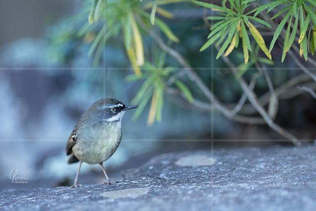 小鳥 三分割構図