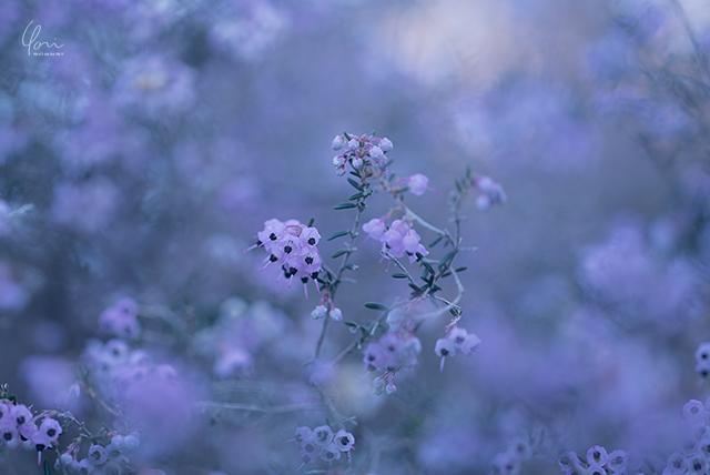 日の丸構図 花