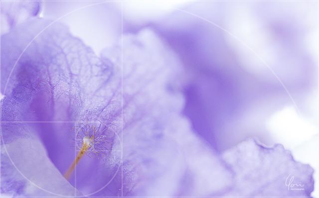 フィボナッチ 写真 構図 基本 テクニック 上達