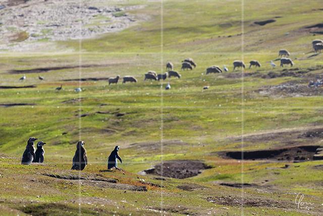 四分割構図 フォークランド諸島 写真 構図 基本 テクニック 上達