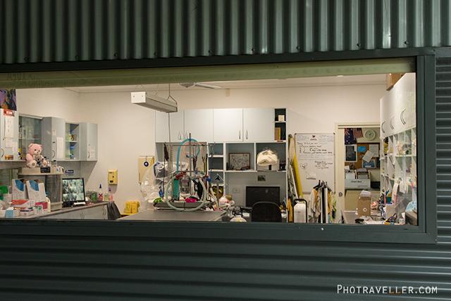 ポートマッコーリーコアラ病院 診察室