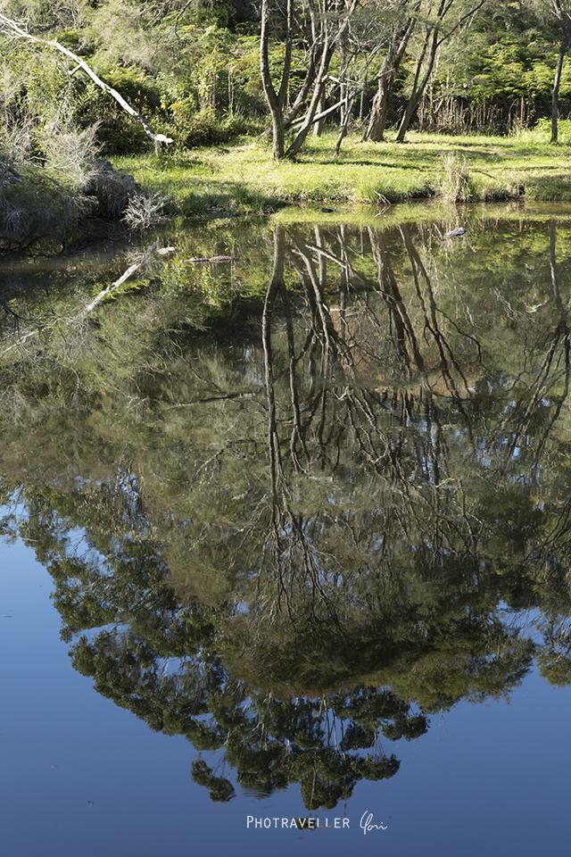 ワニを探せ アリゲーター オーストラリアン レピタイルパーク 爬虫類公園