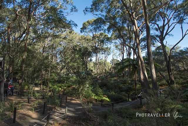 園内 オーストラリアン レピタイルパーク 爬虫類公園