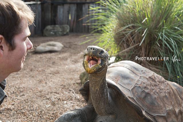 ガラパゴスゾウガメ オーストラリアン レピタイルパーク 爬虫類公園
