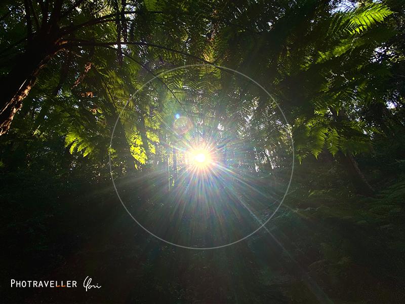 iPhone11 超広角 作例 日の丸構図 光芒3