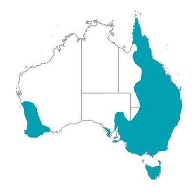 クッカバラ ワライカワセミ 生息地 オーストラリアの野鳥