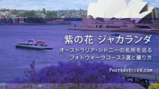 オペラハウス 紫の花 世界三大花木 ジャカランダ オーストラリア