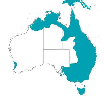 キバタン コカトゥー 生息地 オーストラリアの野鳥