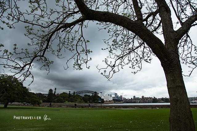 白いジャカランダ オーストラリア シドニー