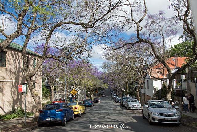Carabella Street 世界三大花木 ジャカランダ オーストラリア