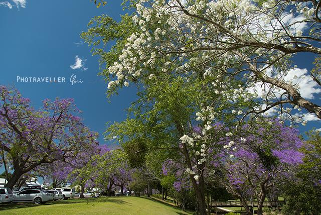 See park white jacaranda