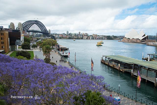 オペラハウス ハーバーブリッジ 紫の花 世界三大花木 ジャカランダ オーストラリア