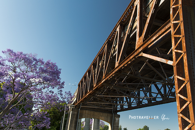 Grafton bridge and Jacaranda