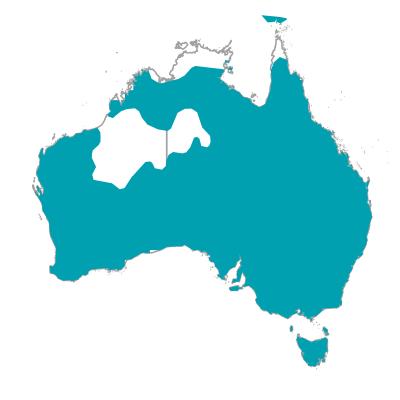 マグパイ カササギフエガラス オーストラリアの野鳥