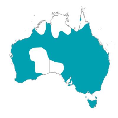 ウッドダック タテガミガン 生息地 オーストラリアの野鳥