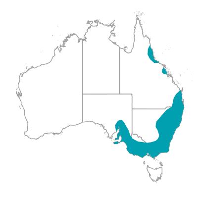 クリムゾンロゼーラ アカクサインコ 生息地 オーストラリアの野鳥