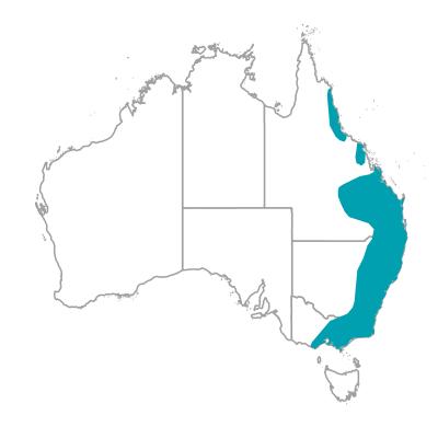 キンショウジョウインコ キングパロット King parrot オーストラリアの野鳥