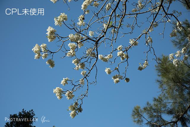 白い花_CPL未使用