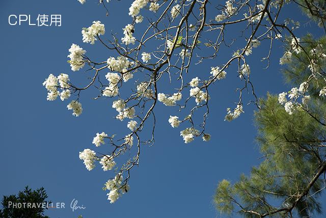白い花 CPL使用