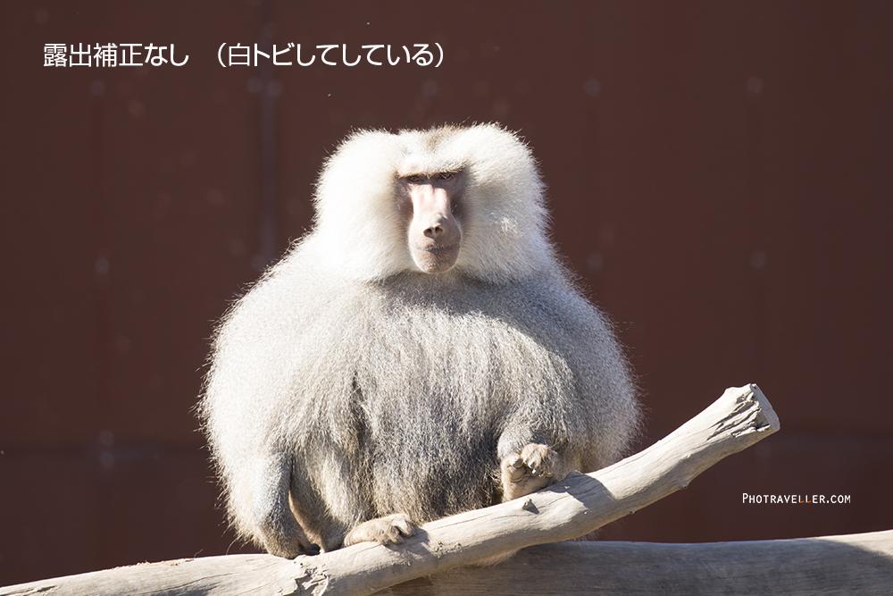 白飛びバブーン